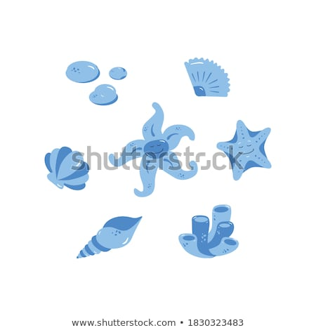 scallop and mollusk posters vector illustration stock photo © robuart