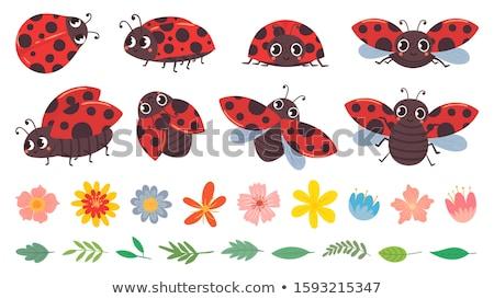 Szczęśliwy cartoon Ladybug ilustracja patrząc zwierząt Zdjęcia stock © cthoman