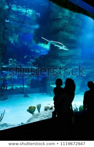 美人 見える サメ 美しい 観光 ストックフォト © NeonShot