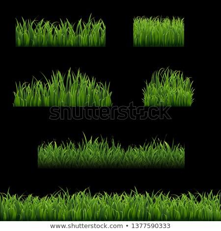 big set green grass borders black background stock photo © barbaliss