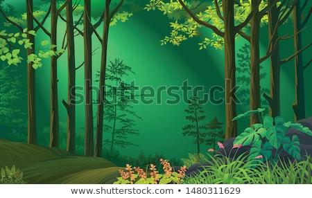 シーン 森林 雨 実例 木材 風景 ストックフォト © colematt