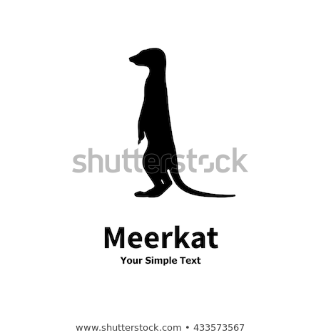 African wild animal, cute suricate, meerkat icon isolated on white background, vector Stock photo © MarySan
