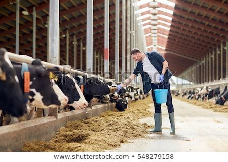 Landbouwer veel boerderijdieren illustratie natuur paard Stockfoto © colematt