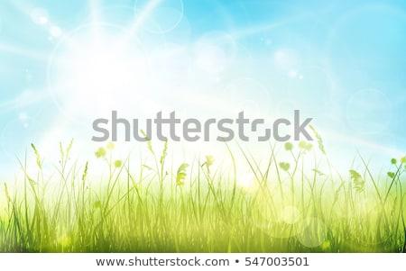 green grass border blue sky stock photo © cammep