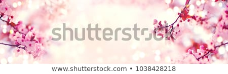 Amandel bloesem veel natuur plant Stockfoto © LianeM
