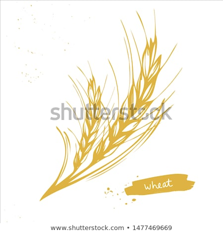 Color Designed Agriculture Grain Barley Spike Vector Stock photo © pikepicture