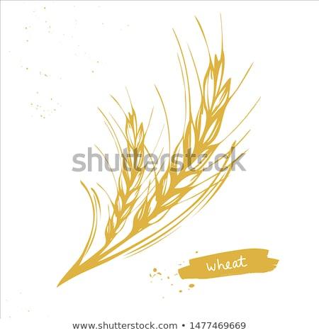 kırsal · tarım · alan · bağbozumu · oyma · pop · art - stok fotoğraf © pikepicture
