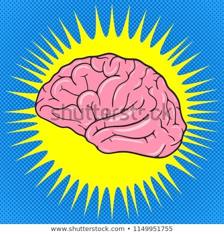 anatomica · testa · organo · cervello · umano · vintage · colore - foto d'archivio © pikepicture