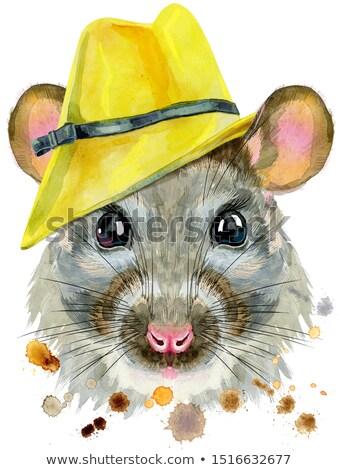 акварель портрет крыса желтый Hat Сток-фото © Natalia_1947