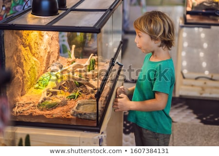 Little kid boy admire big turtles in terrarium through the glass Stock photo © galitskaya