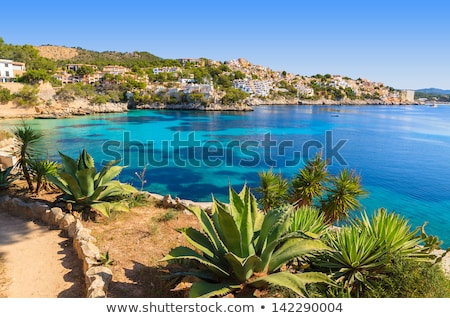 beach in mallorca spain with palm tree and mediterranean sea Stock photo © godfer