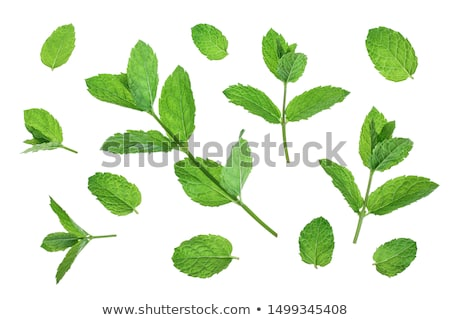 mint stem Stock photo © smithore