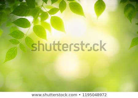 zöld · levelek · napfény · fa · erdő · nap · naplemente - stock fotó © kawing921