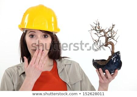 Tradeswoman holding a bonsai tree Stock photo © photography33