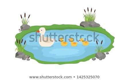 синий · воды · три · птица · куриные · утки - Сток-фото © ryhor