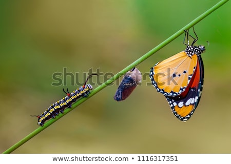 Caterpillar of the butterfly on green leaf Stock photo © pzaxe
