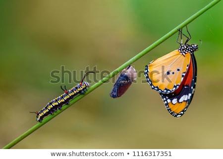 grande · árvore · lagarta · borboleta · natureza · verão - foto stock © pzaxe