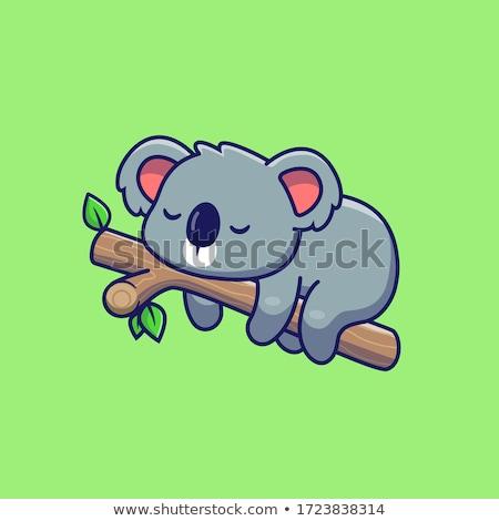 sonolento · coala · árvore · olhos · viajar · nariz - foto stock © samsem