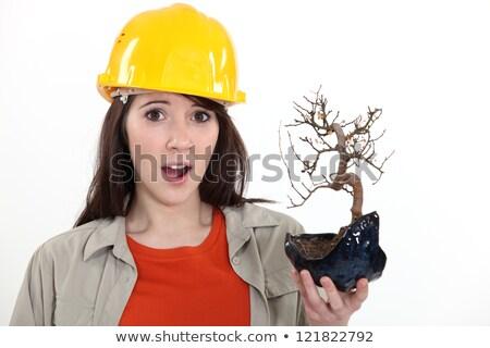 építőmunkás tart halott bonsai arc fa Stock fotó © photography33