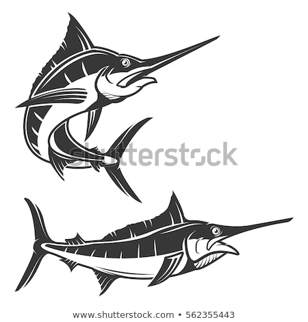 Stock photo: Marlin fish vector illustration