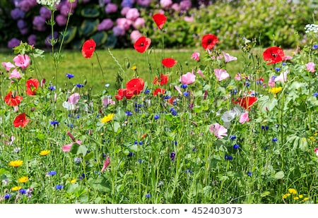 Kleurrijk weide voorjaar liefde natuur Stockfoto © meinzahn