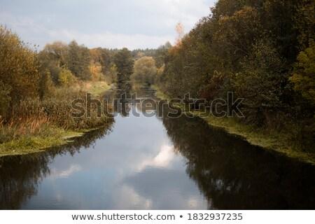 Stok fotoğraf: Orman · göl · beyaz · bulutlar · yüzey · küçük
