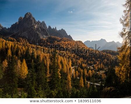 Fa völgy erdő tájkép nyár kék Stock fotó © Antonio-S