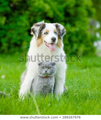 Família sessão cães juntos prado pai Foto stock © Kzenon