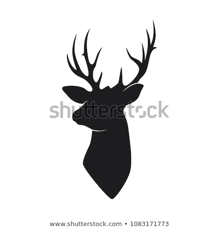 wild buck head with the black horn stock photo © HunterX