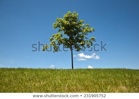 Stockfoto: Eenzaam · boom · blauwe · hemel · hemel · berg · Blauw