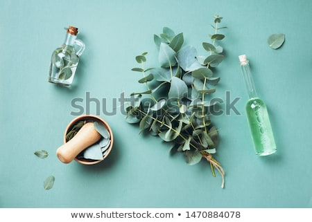 自然療法 新鮮な ハーブ スパイス 白 自然 ストックフォト © joker
