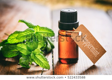 Peppermint in the garden with a wooden label Stock photo © Zerbor