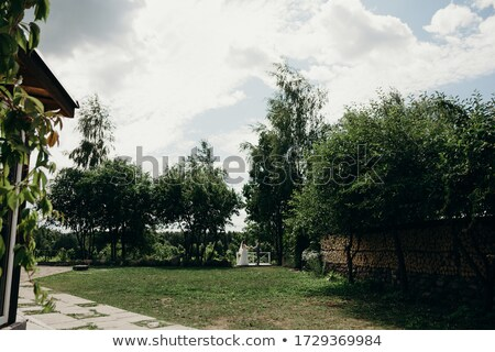 fiance holds bride on the hands on to the meadow Stock photo © Paha_L