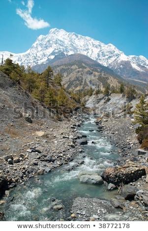 Nehir tibet su çim orman Stok fotoğraf © vapi