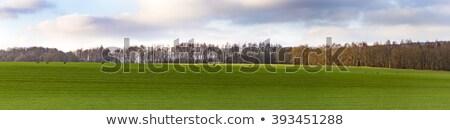 alanları · ağaçlar · Almanya · gökyüzü · gıda · manzara - stok fotoğraf © meinzahn