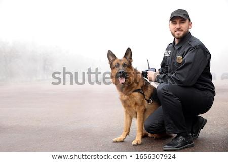 police dog policeman with a german shepherd on duty stock photo © wellphoto