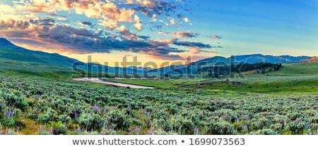 amerikai · bölény · hó · fedett · mező · Saskatchewan - stock fotó © pictureguy