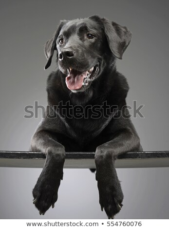 Stock photo: Mixed breed happy dog portrait in grey background