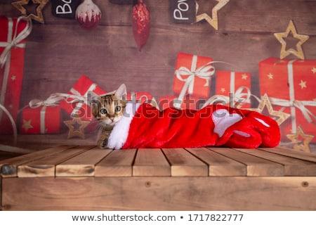 Meias ilustração inverno silhueta natal desenho animado Foto stock © adrenalina