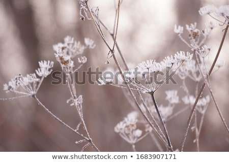 Soğuk kış çalı dondurulmuş manzara doku Stok fotoğraf © Kidza
