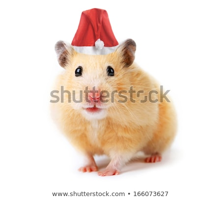 Cute hamster chapeau isolé blanche Photo stock © Elnur