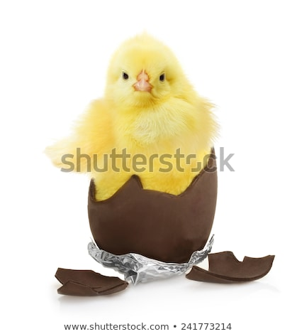 chick with chocolate egg Stock photo © adrenalina