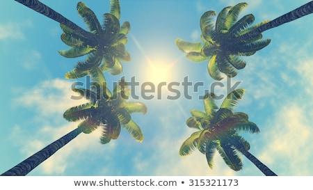Tropicales palmiers soleil paradis paysage arbre Photo stock © orensila