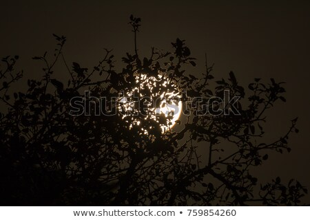 Hasat ay tok sussex İngiltere ışık Stok fotoğraf © suerob
