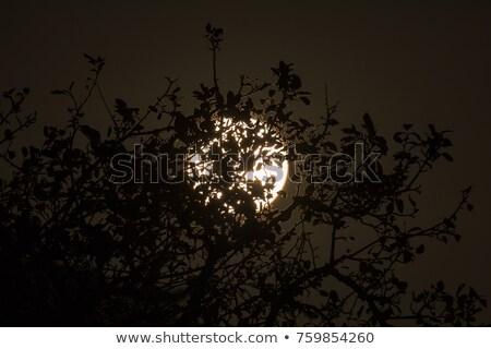 Harvest Moon 6 October 2017 stock photo © suerob