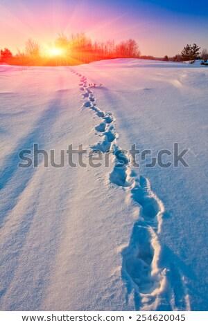снега пути следов Cartoon свежие загрузка Сток-фото © blamb