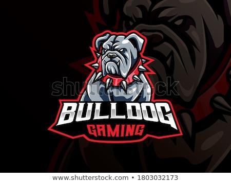 zwart · wit · boos · bulldog · hond · cartoon · mascotte · karakter - stockfoto © krisdog