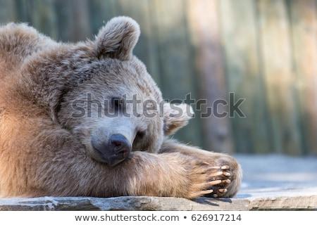 cartoon · ilustracja · grizzly · bear · cute · brązowy · szczęśliwy - zdjęcia stock © lenm