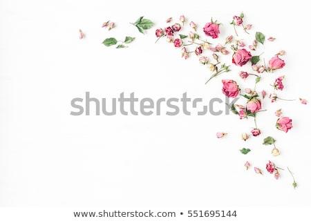 装飾的な · 国境 · バラ · 花 · 緑の葉 · ベクトル - ストックフォト © cammep
