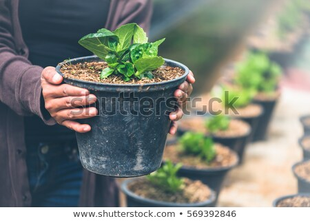 Woman looking at pot plant in nursery Stock photo © IS2
